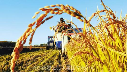 【水稻病蟲害】水稻赤斑黑沫蟬的防治