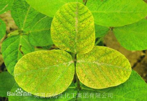 【大豆病蟲害】大豆缺鎂症的原因及防治方法