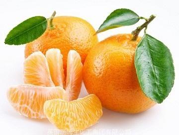 【柑橘病蟲害】柑橘爆皮蟲防治技術