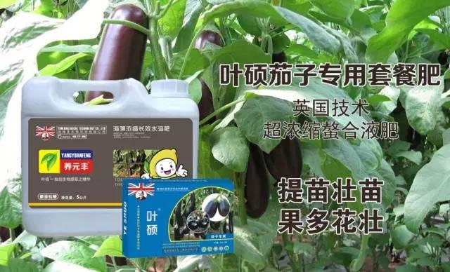 葉碩茄子專用套餐肥