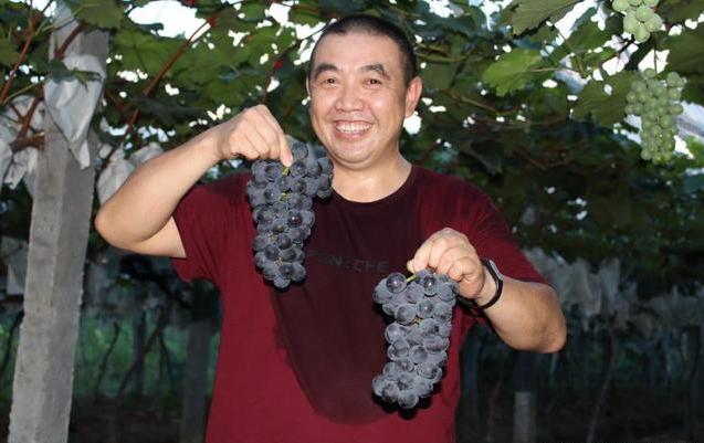 葡萄不打激素行不行?10元一斤的葡萄,讓全村的人都驚呆了!