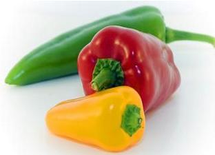 【辣椒病蟲害】甜椒得了炭疽病怎麽辦?